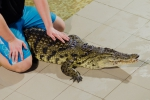 2012_01_28_-_Ekaterinburg_-_Crocodile_farm_03.JPG